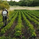 Ayudas a cooperativas agrícolas